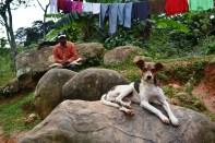 fotos, campo, animales mascotas (13)
