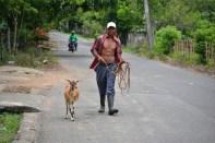 fotos, campo, animales mascotas (7)