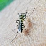 mosquito zika 150x150 Primer caso de Zika chucuchístico del año en Florida