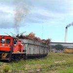 cana produccion azucar transporte 150x150 El renacer de la industria dominicana más dulce