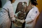 nazis 150x100 Hallan tremenda colección de vainas nazis en Argentina