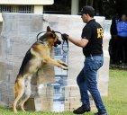 DNCD 300x272 La DNCD investiga el perro que le dio un ñau a pasajera