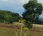 Dajabón 300x253 Así cruzan un reguero de haitianos al país por Dajabón (video)