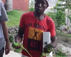 Iguanas 300x240 Mira cómo venden iguanas en RD y lo que revela el tipo (video)