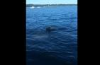 Perrito 300x196 Video   Perro rescata a un pequeño venado de ahogarse