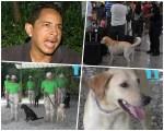 perro 150x120 Experto explica posibles causas del ataque de perro a pasajera
