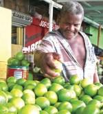 limones 150x166 RD produce alrededor de 500 millones de limones al año
