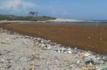 playa 150x99 Ay fooo! – Playas del Sur jodías por pilae algas y basura (Video)