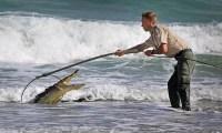 coco 200x120 Fotos: Agarran cocodrilo en playa de Miami