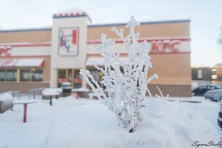 KFC 门口的草也被白雪包裹住了。