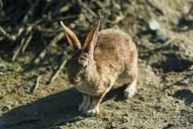 这只兔子格外愤怒,刚把一只松鼠踢走