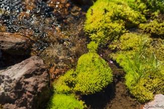 有水的地方就有一抹绿色