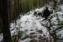 前往 Wallace Falls 的 trail 是偏下的部分,只是泥泞潮湿,并没有雪。我们决定走到上游的 Wallace Falls 没过多远,正在嘟哝没看见雪的我注意到了路旁的积雪慢慢增多,而到了这里,我们正式进入雪线,我忙拿出登山杖,开始在雪地里行动。一开始雪很浅,一脚可见下面的泥,慢慢的雪层增厚,一脚下去都是松软的雪花。