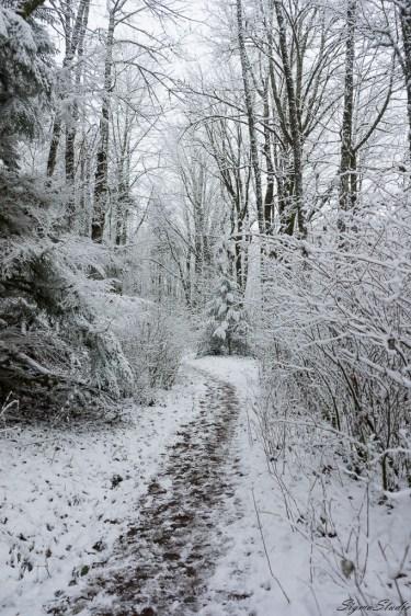 Bullit Fireplace Trail