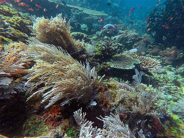 Kanawa islands soft coral reef