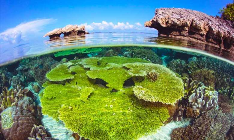 Above and below shallow coral reef in Raja Ampat