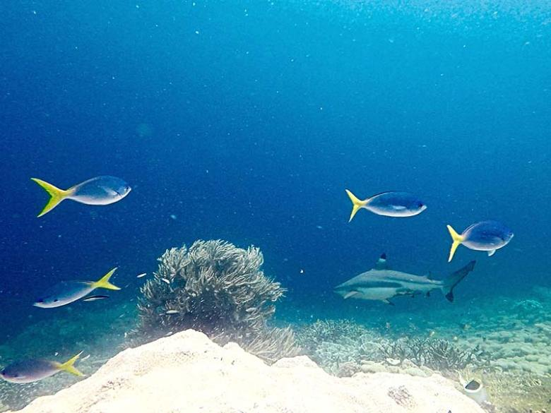 Best snorkelling in Arborek