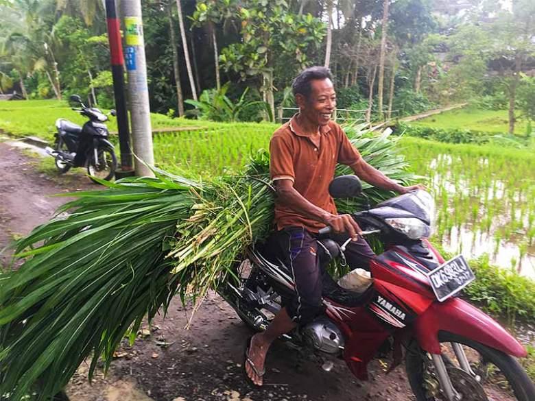 Smiling Balinese Farmer Ubud