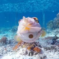 best snorkelling in raja ampat
