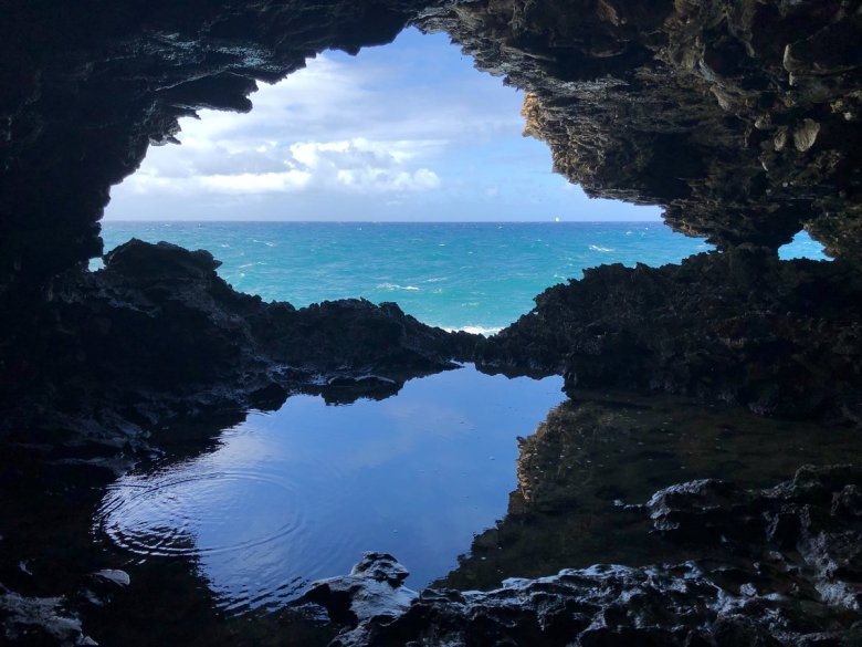 Inside the Animal Flower Cave in Barbados
