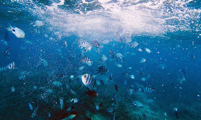 Snorkeling shark island, koh tao