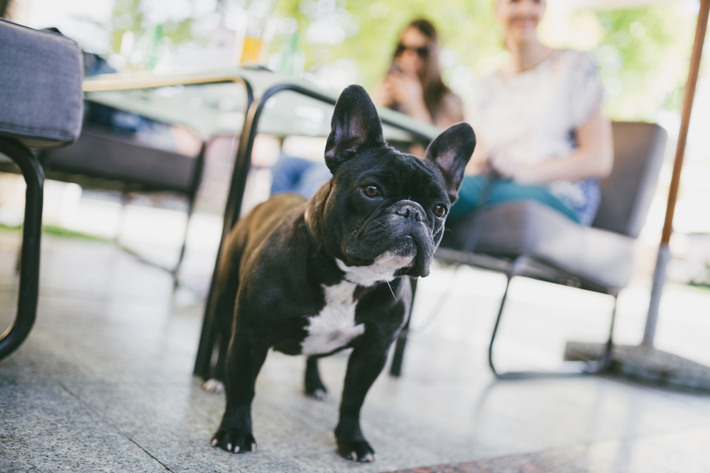 Dog friendly bars in Toronto