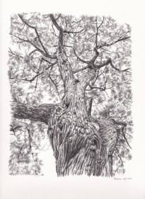 Tree Pen Drawing 1