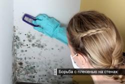 борьба с плесенью на стенах