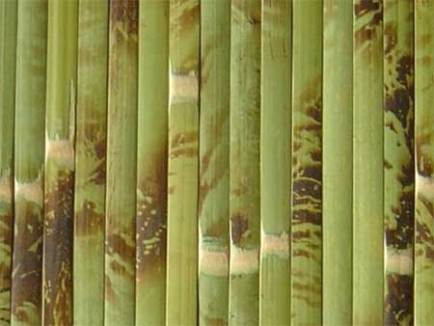 bamboo wallpaper color 2