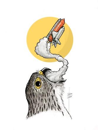 procreate-falcon