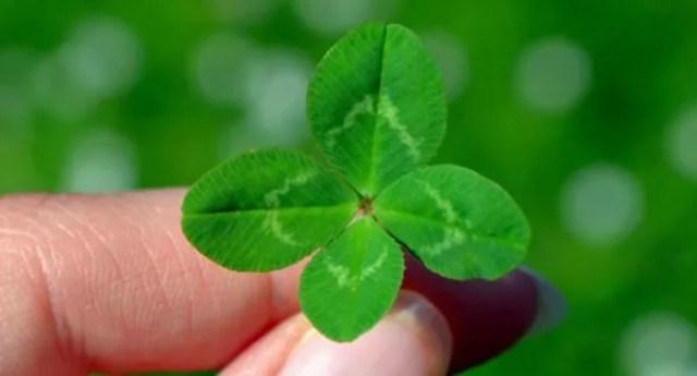 4つ葉のクローバー 幸運 お守り ラッキー