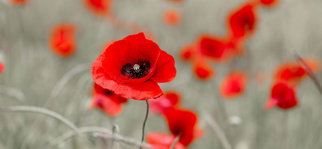 """Review of """"Lest We Forget"""" concert on 27 October"""