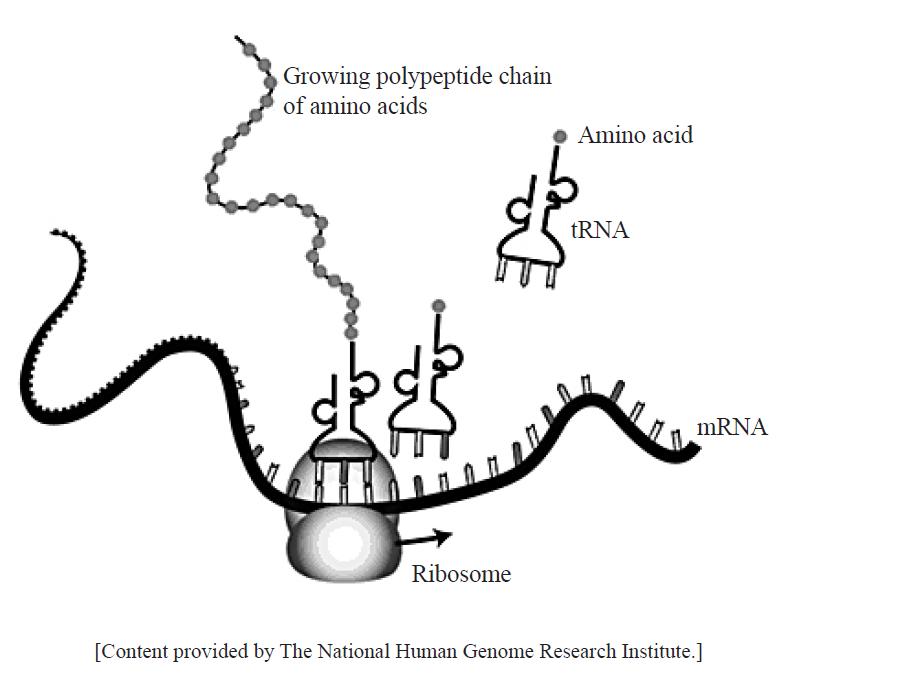 Ib Biology Molecular Biology