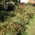 Der insektenfreundliche Blühstreifen im Strebergarten