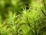 Frühling im Wald (12)