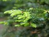 Frühling im Wald (13)