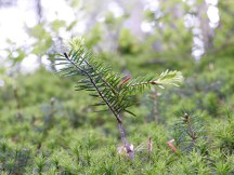 Frühling im Wald (4)