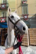 """A horse. Nikon D810, 24 mm (24-120 mm ƒ/4) 1/1250"""" ƒ/18 ISO 3200"""