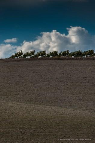 Vinyard. Nikon D750, 400 mm (80-400.0 mm ƒ/4.5-5.6) 1/160 ƒ/9 ISO 100