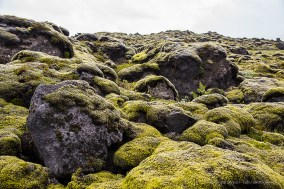Moss covers the lava stones scattered all over the place. Nikon D810, 44 mm (24-120.0 mm ƒ/4) 1/50 sec ƒ/5.6 ISO 64