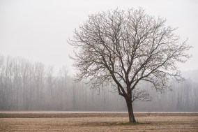 Countryside surrounding Caravino. Nikon D810, 85 mm (85. mm ƒ/1.4) 1/320 ƒ/2.8 ISO 64