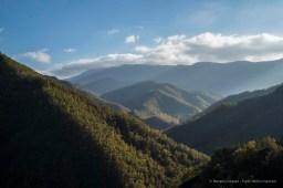 """Foreste Casentinesi. Nikon D810, 50 mm (50.0 mm ƒ/1.8) 1/200"""" ƒ/8 ISO 64"""