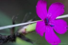 "Late blooming. Foreste Casentinesi. Nikon D810, 105 mm macro (105.0 mm ƒ/2.8) 1/4"" ƒ/8 ISO 64"