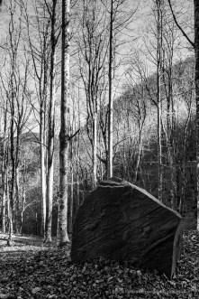 """Foreste Casentinesi. Nikon D810, 24 mm (24.0 mm ƒ/1.4) 1/125"""" ƒ/8 ISO 400"""