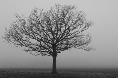 mists-004