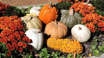 Pumpkins set the stage of The Chicago Botanic Garden