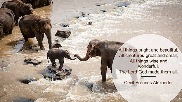 Nancy's Novelty Photos on Pixels Products for You - Elephants All Creatures Great and Small