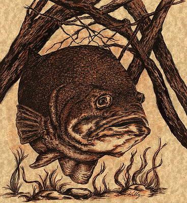 Bass Fish Drawings Fine Art America