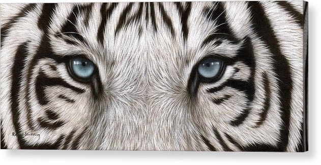 White Tiger Eyes Painting Acrylic Print By Rachel Stribbling