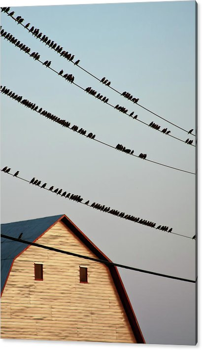 Bed Time - birds on power lines by Tatiana Travelways